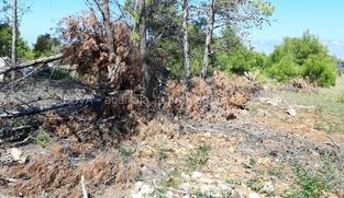 Poljoprivredno zemljište 600 m2 na Viru, Zadar *350 m OD PLAŽE* *POGLED MORE* *1. RED DO GRAĐEVINSKE ZONE*